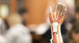 Close up of a skeletal system hand